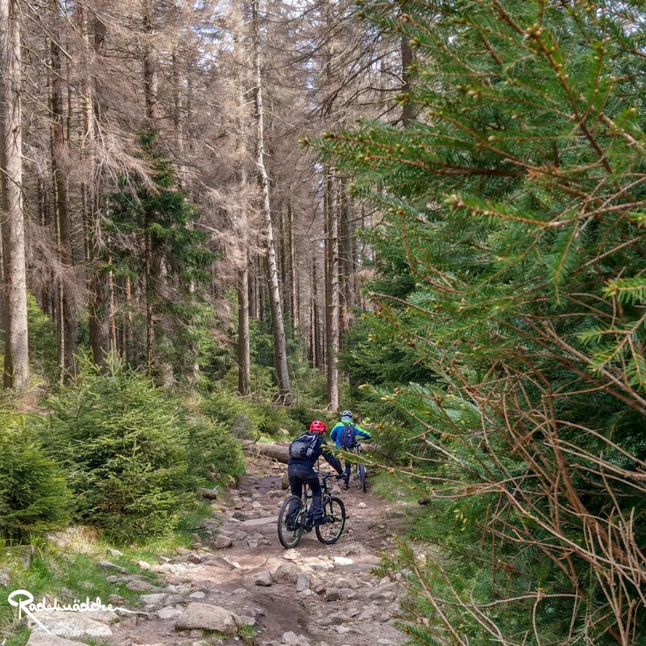 E-MTB-Mountainbike-Harz-Wernigerode-ebike-your-life_Radelmaedchen_Juliane-S-6