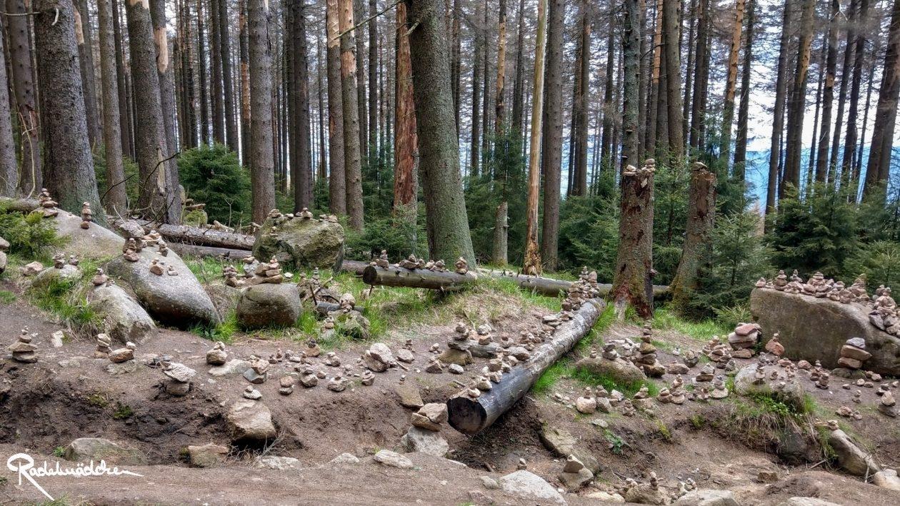 E-MTB-Mountainbike-Harz-Wernigerode-ebike-your-life_Radelmaedchen_Juliane-S-31
