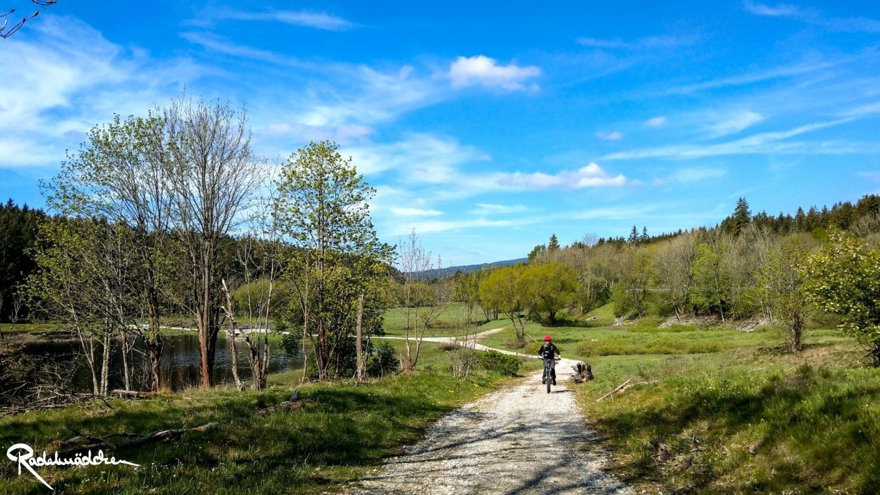 E-MTB-Mountainbike-Harz-Wernigerode-ebike-your-life_Radelmaedchen_Juliane-S-22