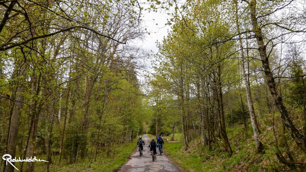 E-MTB-Mountainbike-Harz-Wernigerode-ebike-your-life_Radelmaedchen_Juliane-S-15