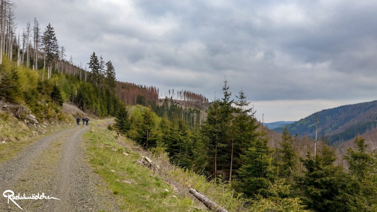 E-MTB-Mountainbike-Harz-Wernigerode-ebike-your-life_Radelmaedchen_Juliane-S-18