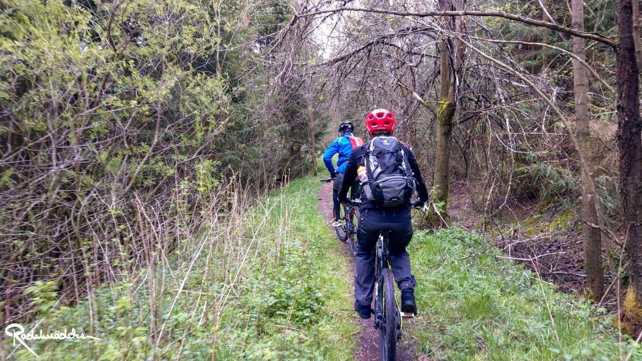 E-MTB-Mountainbike-Harz-Wernigerode-ebike-your-life_Radelmaedchen_Juliane-S-11