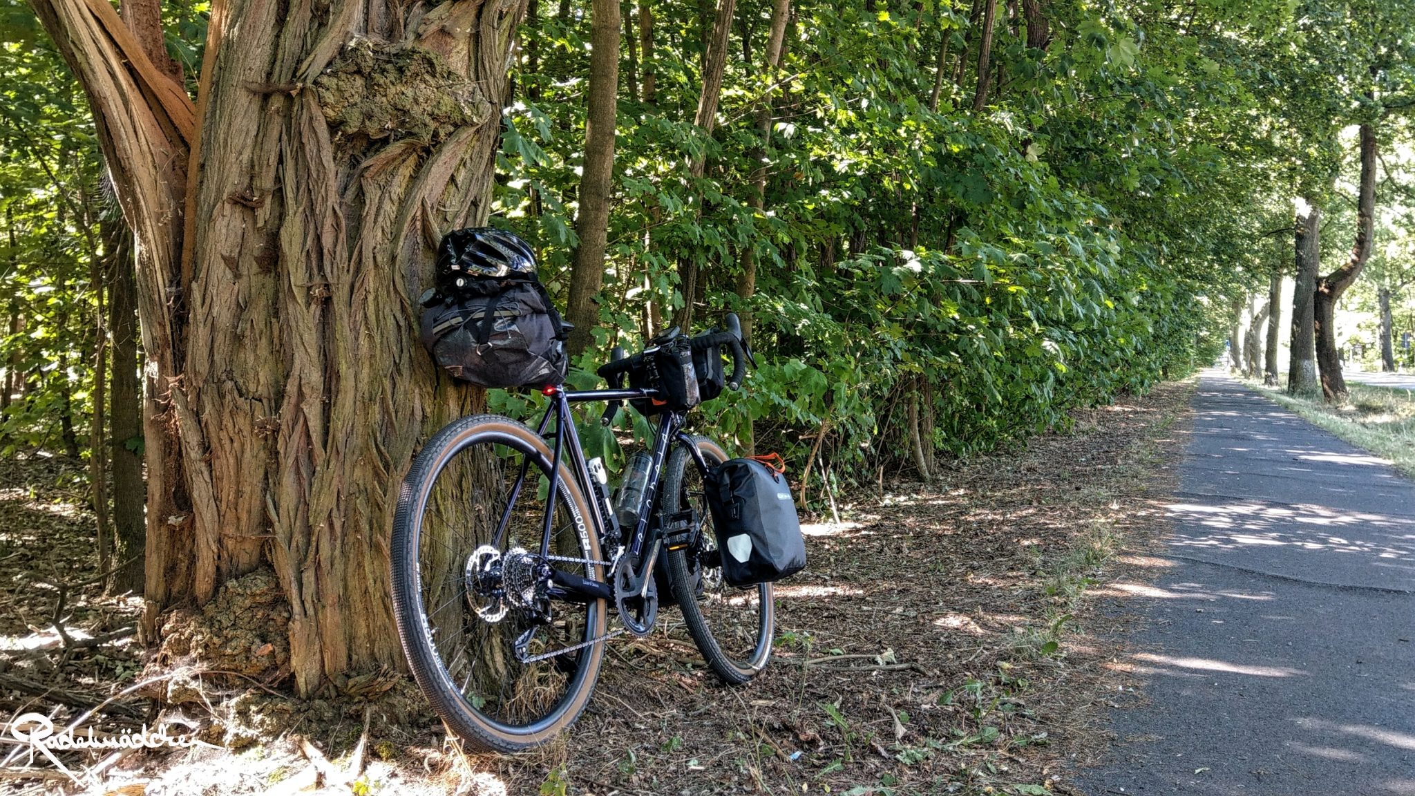 gravelbike leaning against a tree
