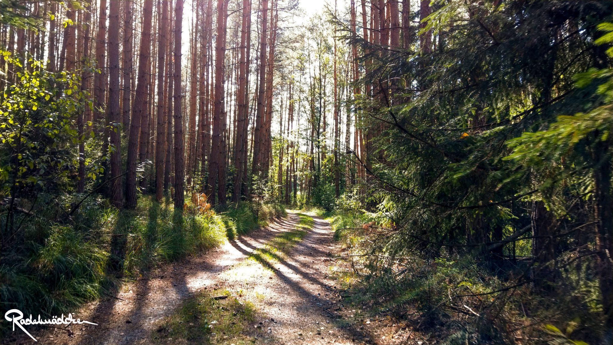 Waldmoment