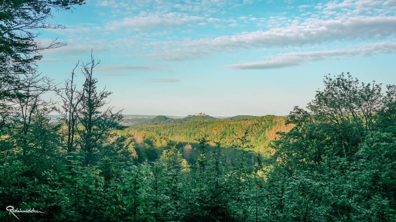 Ausblick über den Wald