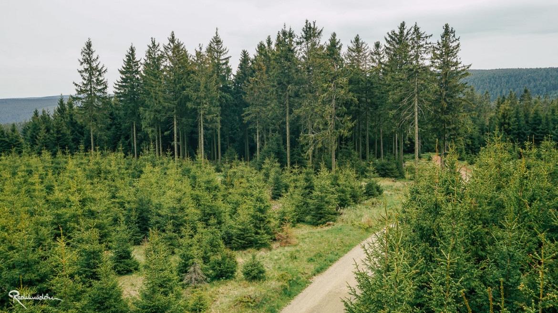 Blick auf den Wald