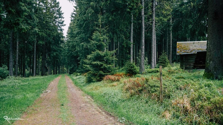 Waldweg mit Hütte