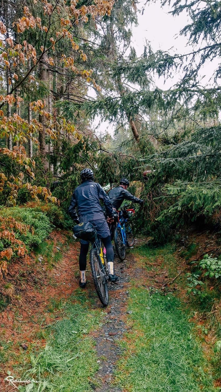 versperrter Weg im Wald