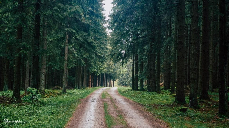Thüringer Wald Weg