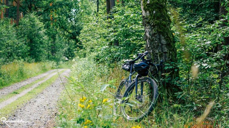 Fahrrad im Wald