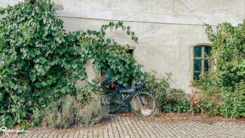 Fahrrad an der Wand mit Weinreben