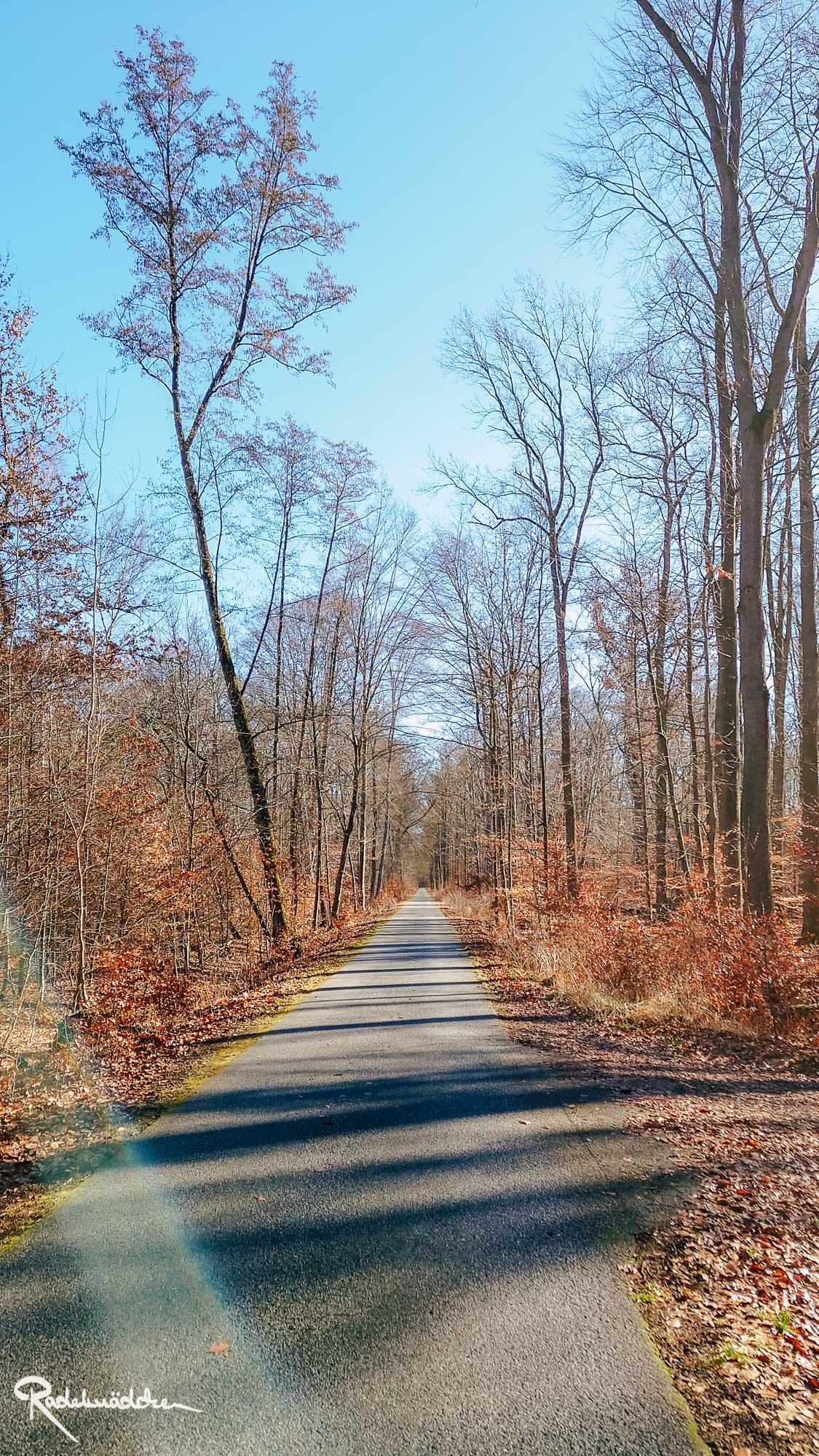 Asphaltweg im Wald