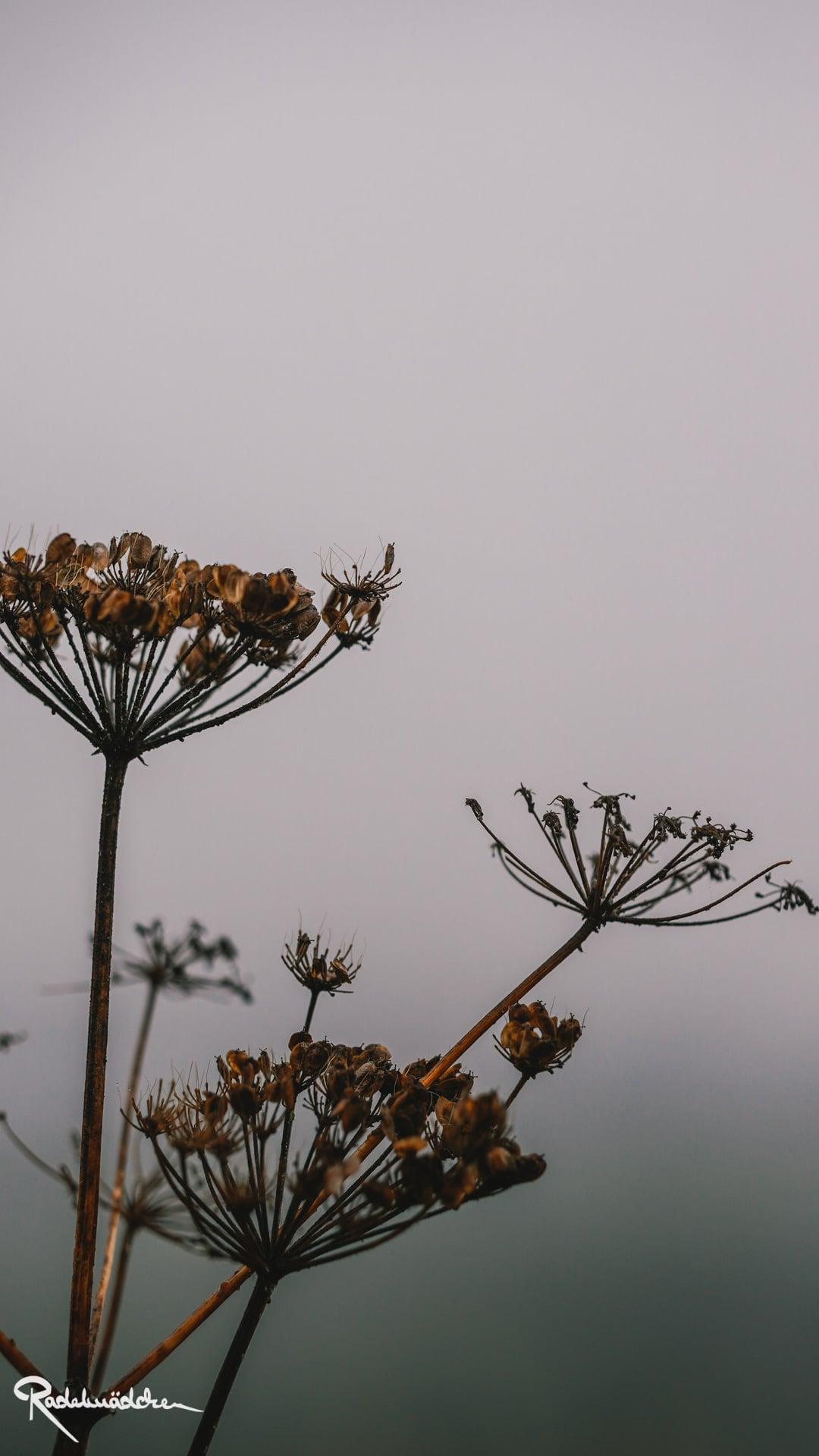 Pflanze im Nebel