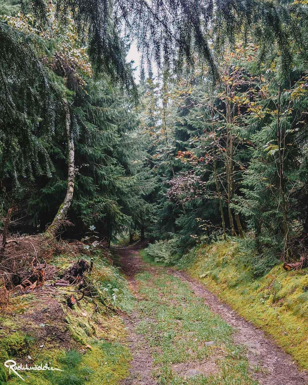Matschiger Weg im Nadelwald